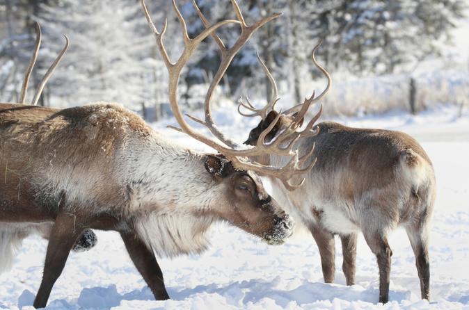 Рованиеми – Официальный родной город Санта Клауса в Лапландии в ...