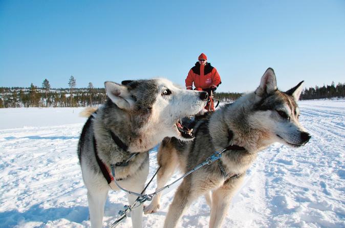 Lapland Snowmobile Safari to a Husky Farm from Rovaniemi Including Husky Sled Ride