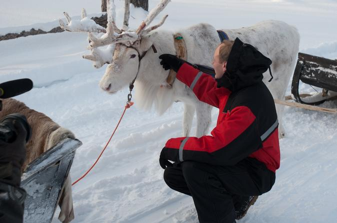 Reindeer Farm Visit and Sleigh Ride from Levi