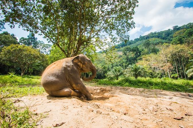 Elephant Care, Feeding, ATV Riding and White Water Rafting