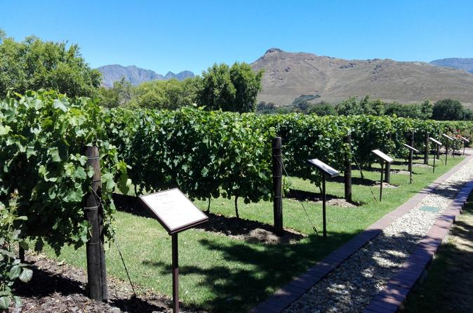 HALF DAY CPT PRIVATE WINE TOUR DRIVE - Cape Town