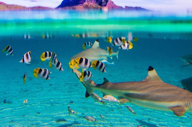 Cruzeiro de dia inteiro nas lagoas de Bora Bora, incluindo snorkel com tubarões e arraias