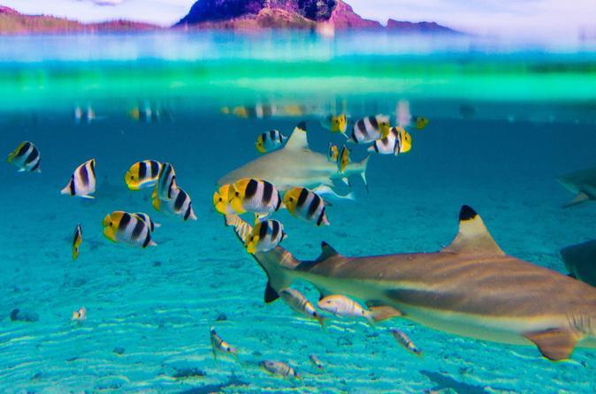 Full-Day Bora Bora Lagoon Cruise Including Snorkeling with Sharks and Stingrays