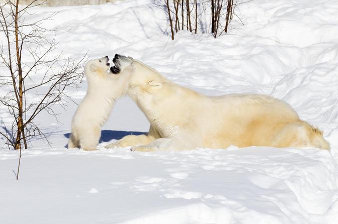 Private Ranua Zoo Tour - Rovaniemi