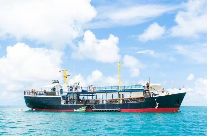 Antigua D-Boat Adventure with Optional Stingray City Tour