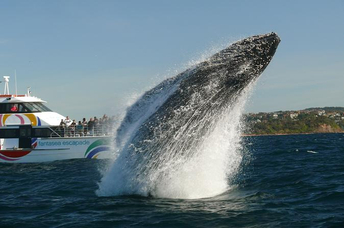 Sydney Whale-Watching Cruise from Circular Quay or Darling Harbour