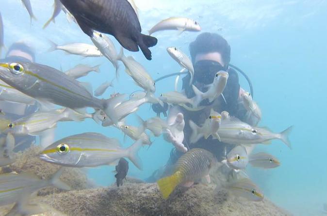 Beginner Scuba Diving Tour - Panama City Beach