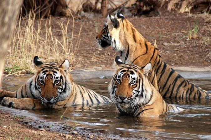 Ranthambore Wildlife Private Day Tour - Jaipur