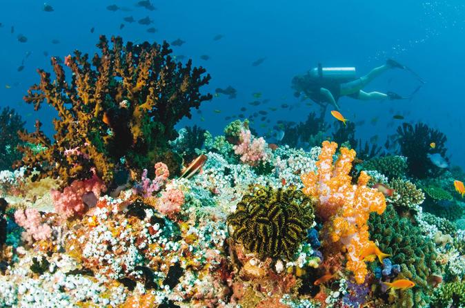 2 X Dive At Blue Lagoon Combination Heaven Gate And Tirta Gangga - Kuta