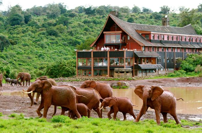 BEAUTY OF KENYA ( ABERDARE, LAKE NAKURU AND MASAI MARA) - Nairobi