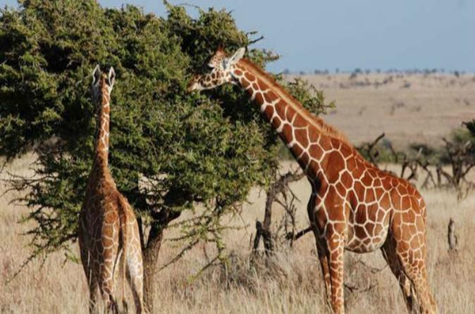 Unique Wildlife Safari