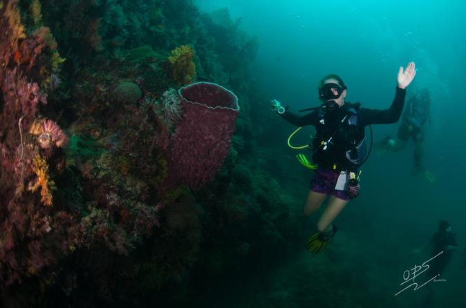 Tauchen vor Phi Phi Island