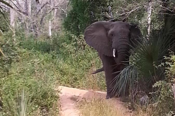 Kissama Safari Tour - Luanda
