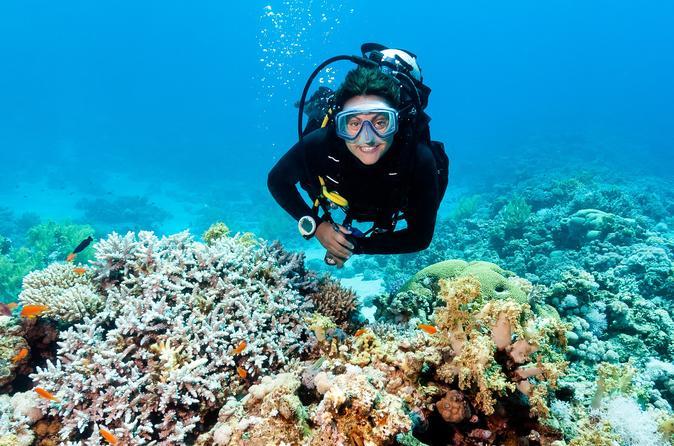 2-Tank Shipwreck Dive in Barbados