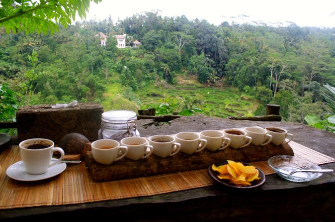 Image result for bali kopi luwak