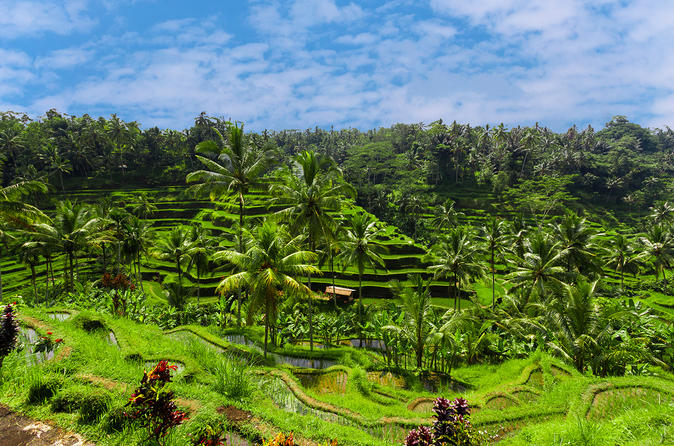 Full-Day Private Ubud Traditional Tour