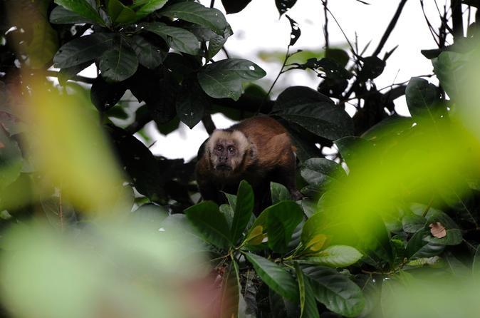03 Days Tour Pacaya Samiria National Reserve With Jungle Reps - Iquitos