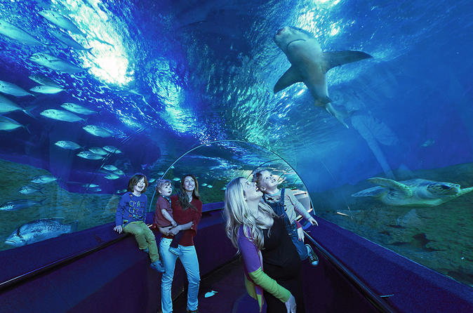 Private Rio De Janeiro Marine Aquarium (Aquario) Tour For Kids And Families