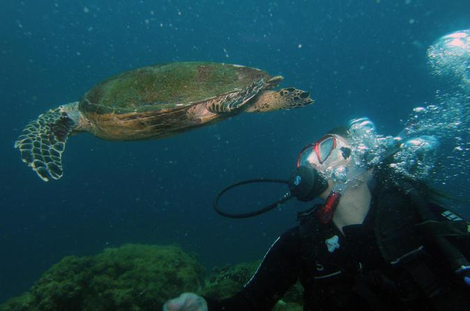 Scuba Diving Experience In Buzios - Rio De Janeiro