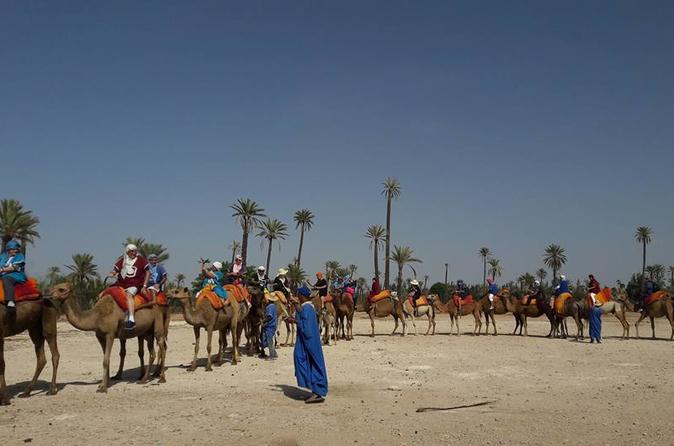 Camel Ride In Oasis - Marrakesh