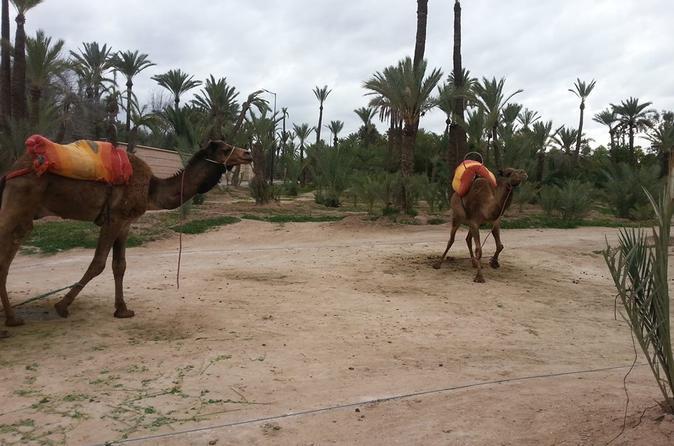 Quad Biking Adventure With Camel Ride - Marrakesh
