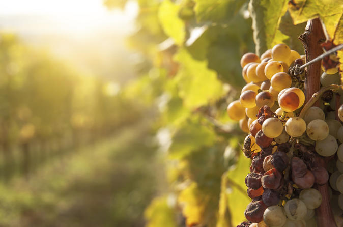 Private Tour: Tokaj Wine Country Day Trip from Budapest