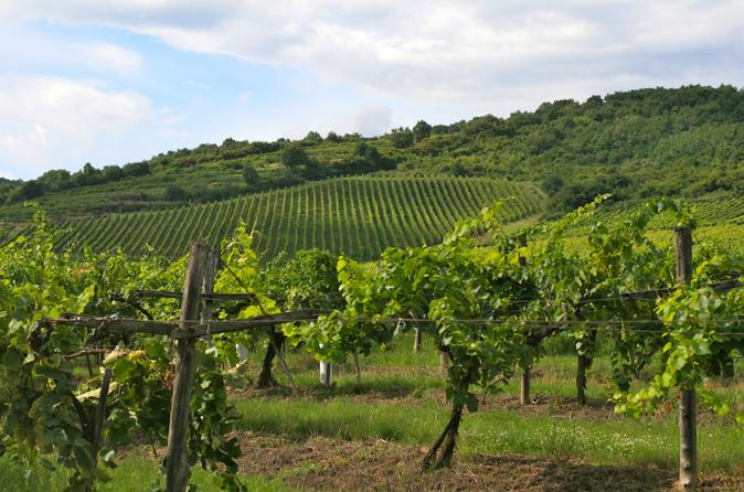 Tokaj Wine Country Day Trip from Budapest