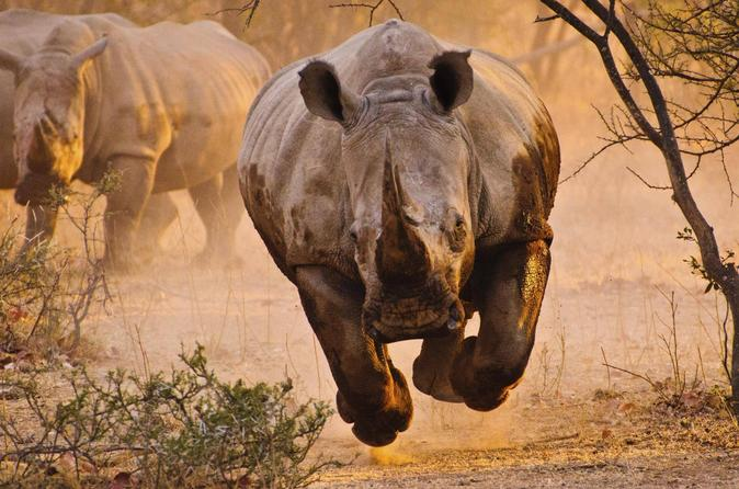 6 Days Kenya Tanzania Combined Safari - 4 Star Lodges