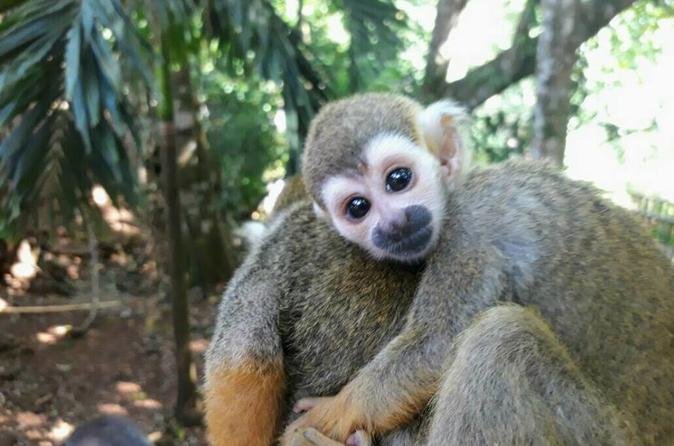 Monkey Jungle & Zip Lining  Adventure - Cabarete