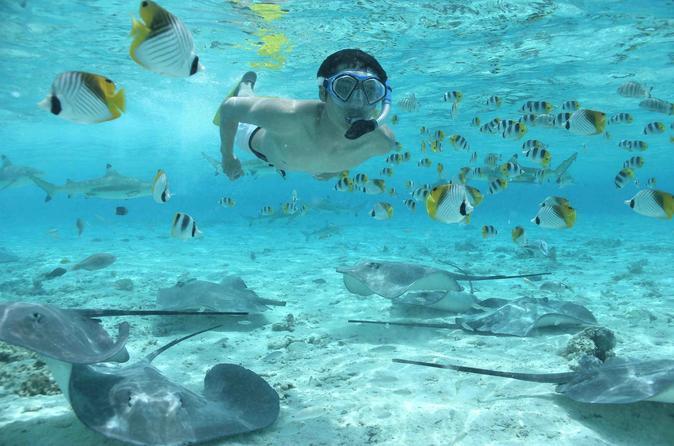 Cruzeiro de snorkel em Bora Bora com alimentação de tubarões e arraias
