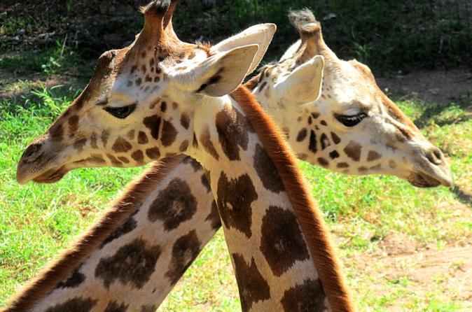 Zooparque Admission Ticket