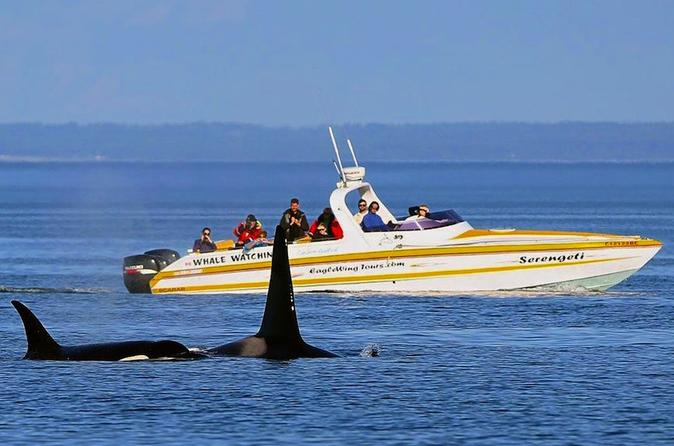 Victoria Whale and Wildlife Cruise