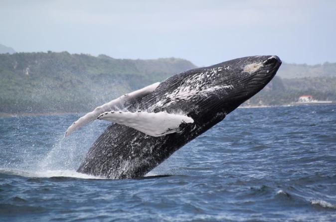 Samana Whale Watching Day Trip by Air From Punta Cana