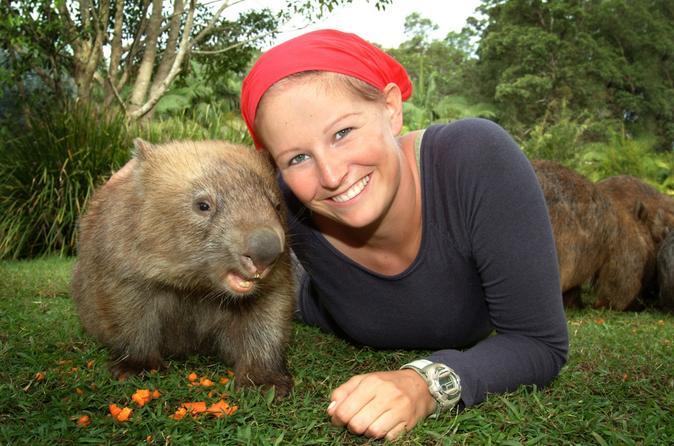 Australia Zoo and Sunshine Coast Day Trip from Brisbane