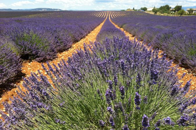 Small-Group Lavender Tour in the Luberon Villages of Lourmarin, Roussillon and Sault from Marseille