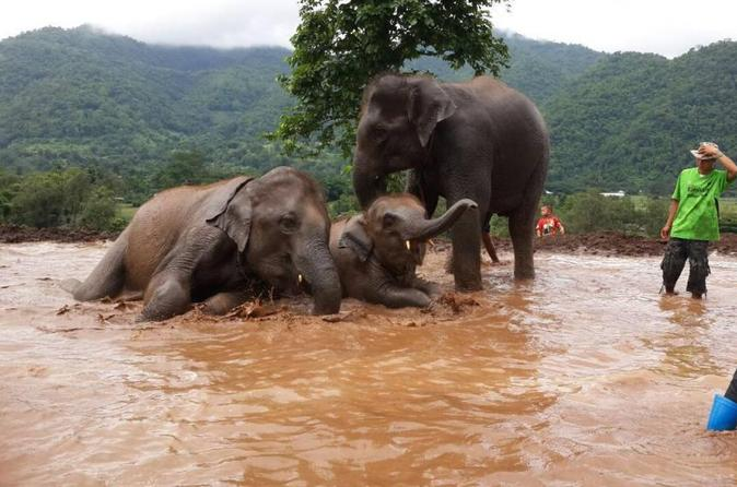 1 day happy elephant camp training course in chiang mai 203941