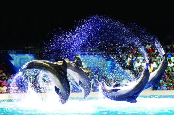 Delfinario de dub i con espect culo de delfines y focas for Espectaculo de dubai fashland