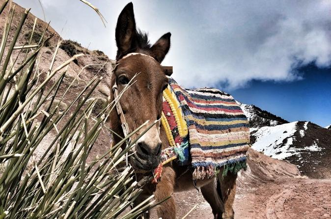 A Cultural Mule Riding Day Trip In The Atlas Mountains ! - Marrakesh