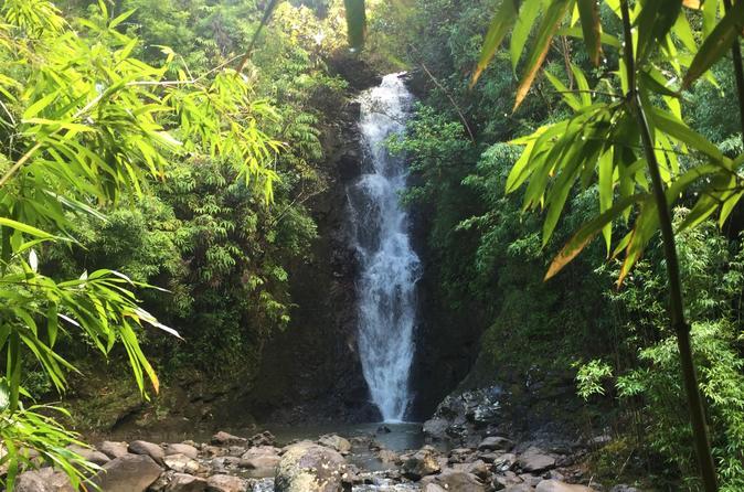 Jungle Waterfall Hike - Maui