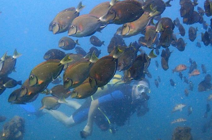 Wreck Dive - Salvador