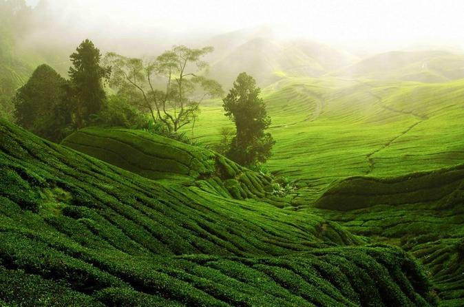 Kaimbethu Tea Farm Full Day Tour