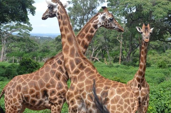 Nairobi Day Trip, Nairobi City tour
