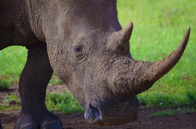 Nairobi National Park, David Sheldrick Wildlife Trust, Giraffe Center and Karen Blixen Museum Day Tour