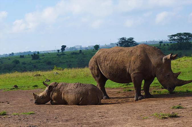 Worlds Wildlife Capital - Nairobi National Park