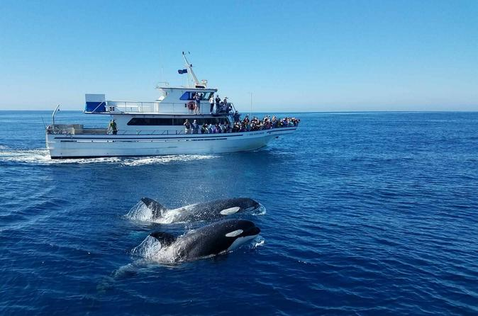 Orange County - Pacific Coast Highway (PCH) & Whale Watching Tour