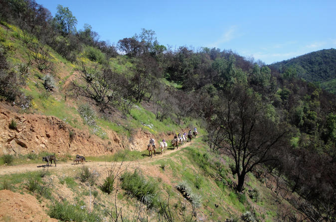 Half day horseback riding in the chilean countryside from valparaiso in valpara so 303393