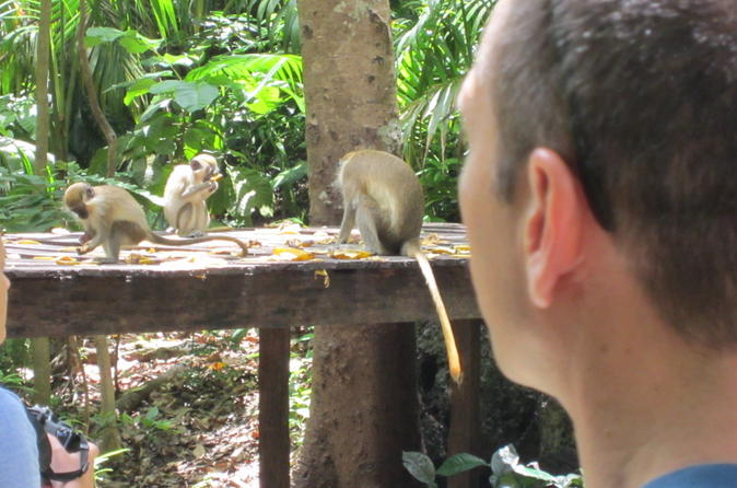 Half-Day Barbados Island Naturally Tour