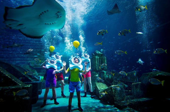 dubai aquaventure waterpark atlantis shark safari experience 2019