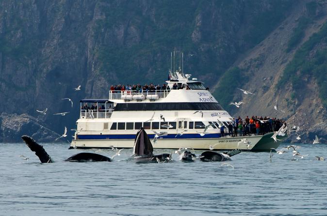 Kenai Fjords National Park Glacier and Wildlife Cruise