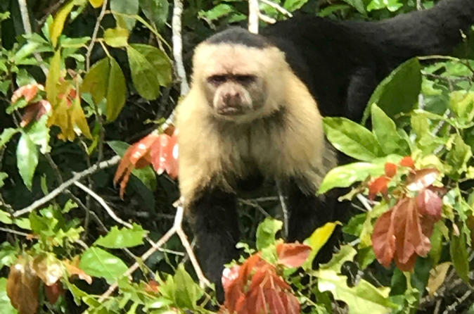 Monkey Island & Wounaan Village